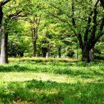 シダーウッド・バージニア精油の効能-深いウッディ―な香り