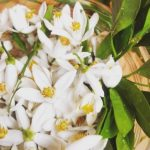 ネロリ精油の効能-甘酸っぱい優雅な香り